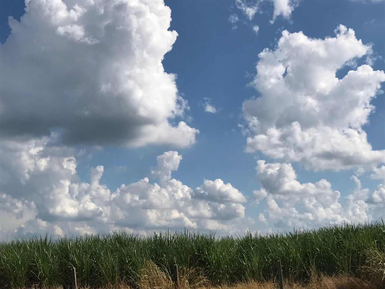 sky, cloud - sky, field, nature, tranquility, day, growth, grass, scenics, no people, beauty in nature, tranquil scene, agriculture, outdoors, landscape, rural scene