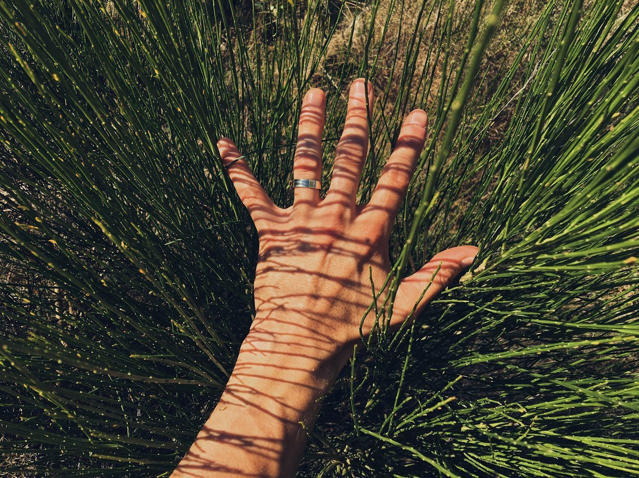 Sunny lines... Grass Human Hand Human Body Part Green Color Outdoors Palm One Person Day Nature People Close-up Adult Adults Only My Favorite Photo Details Of My Life VSCO Shadow Shadows & Lights Pattern Sunlight Made In Romania Close Up Texture Nature Lines Live For The Story