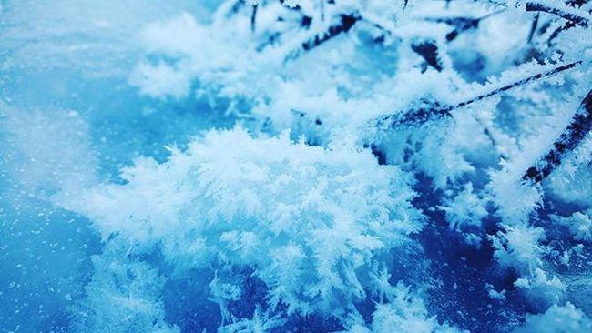 Морозный ежик, хд😊@AppLetstag зима снег Snow холод Природа холодно январь лед красота мороз Nature Winter Cold Ice Beautiful Weather Trees Freezing Mobilephotography Vscocam VSCO Macro Samsung Youmobile Vscogrid vscogood vscogram vscodaily vscophile vscobest