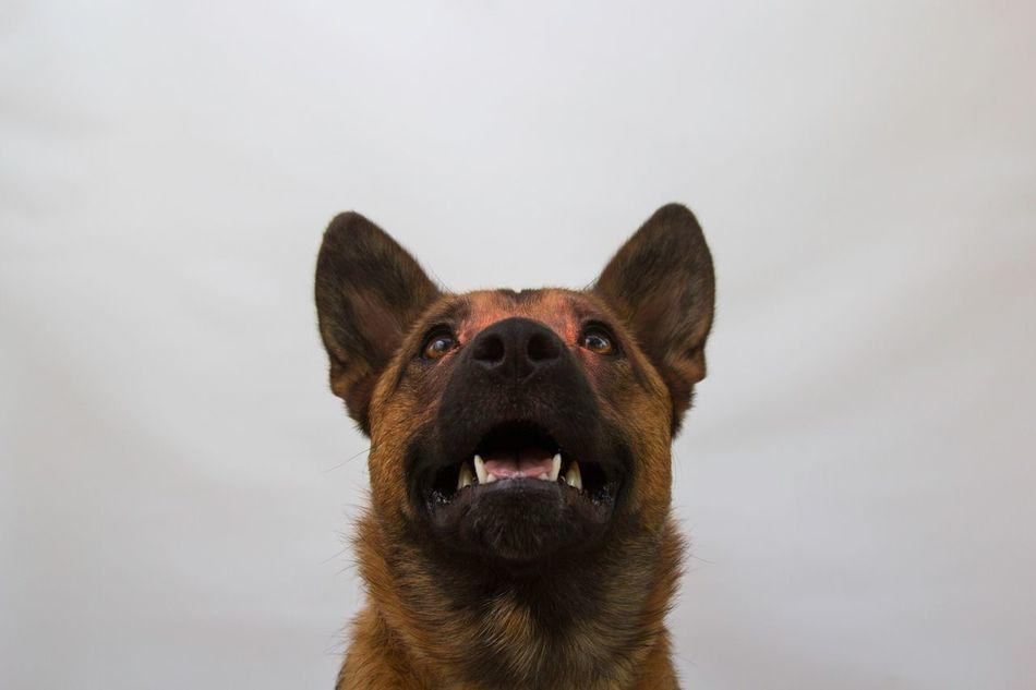 Beautiful stock photos of welpen, one animal, animal themes, dog, pets