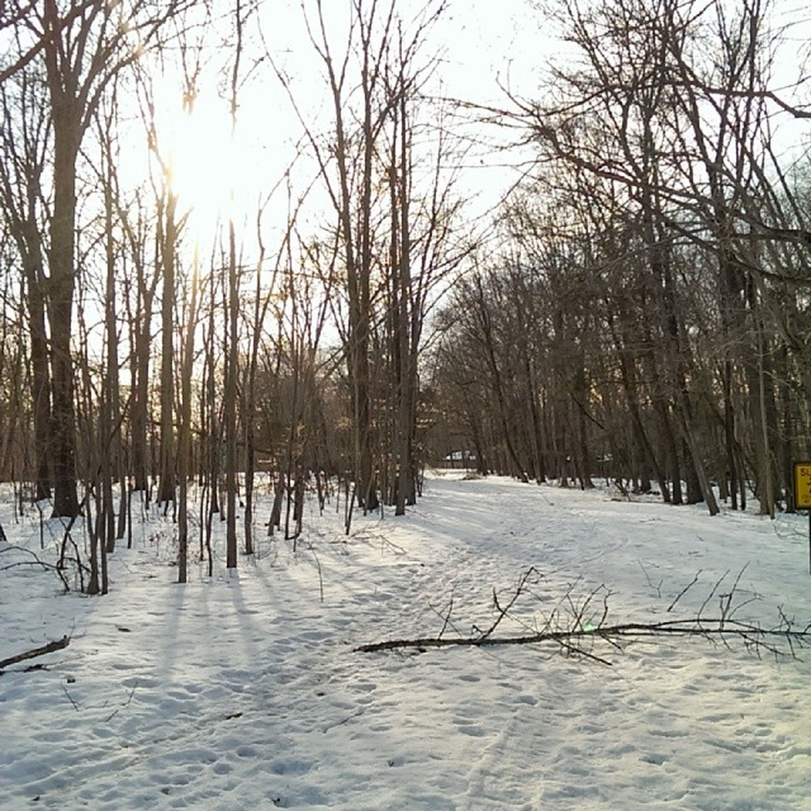 snow, winter, tree, cold temperature, bare tree, season, tranquility, nature, weather, tranquil scene, branch, frozen, tree trunk, covering, treelined, beauty in nature, sunlight, scenics, sky, sun