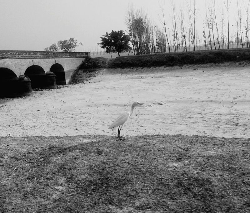 Bird searching for water but the river is dry. Save environment. Be beware of such situation. Animals In The Wild Beauty In Nature Eyeemphotography EyeEm Selects EyeEm Gallery Black And White Createyourownlevel EyeEmNewHere Outdoors Riverside Instantshot Photography Save Water Eyeemfirstphoto