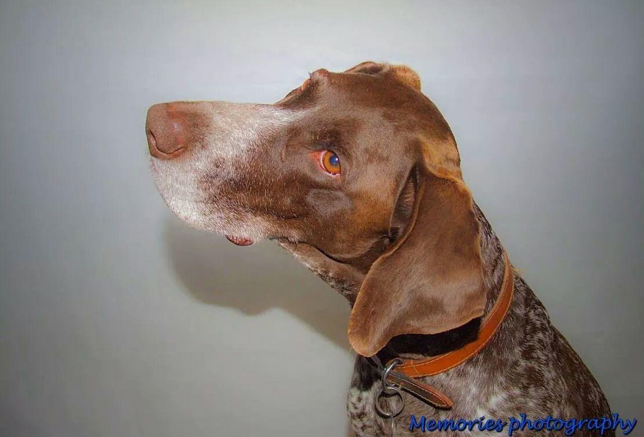 Dog Love Studio Shoot Dogs Memories ❤