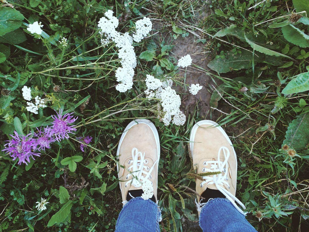 Low Section Shoe Human Leg Standing Growth Outdoors Nature Beautyinnature  Flowers Summervibe Summertime Purple Green Myeyesmyromania