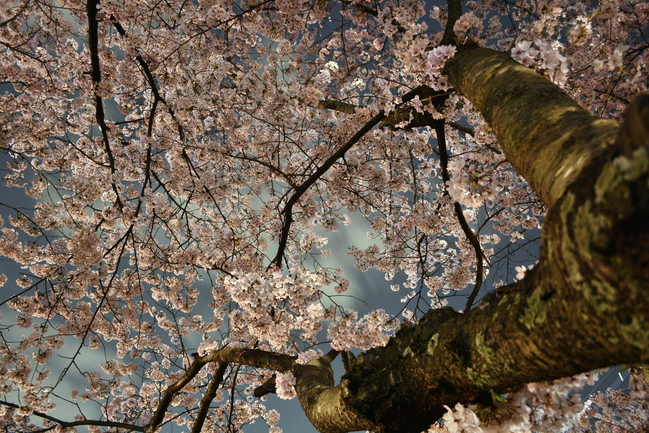 Close-up Low Angle View Of Flower Tree