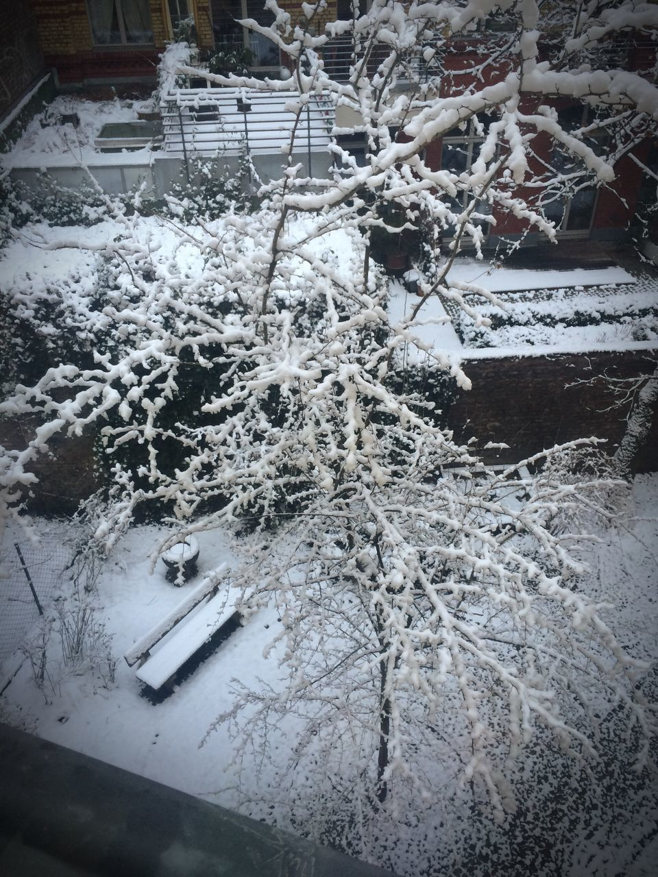 winter, snow, cold temperature, no people, day, indoors, close-up, nature
