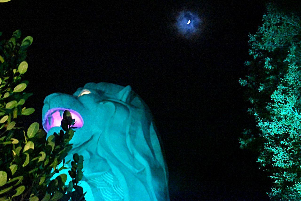 Overnight Success Merlion Singapore ASIA Night