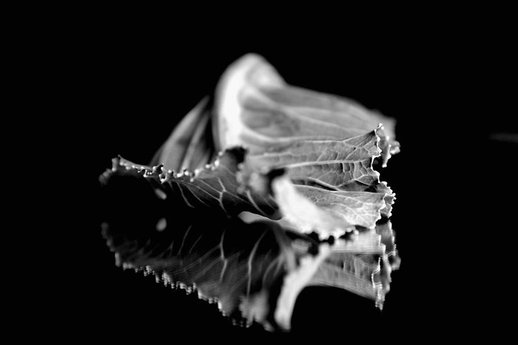 Sleeping time Black Background Studio Shot Leaf No People Réflexion Indoors  Handmade For You Still Life Beauty In Nature Shadows Nature Imagination When You Fall
