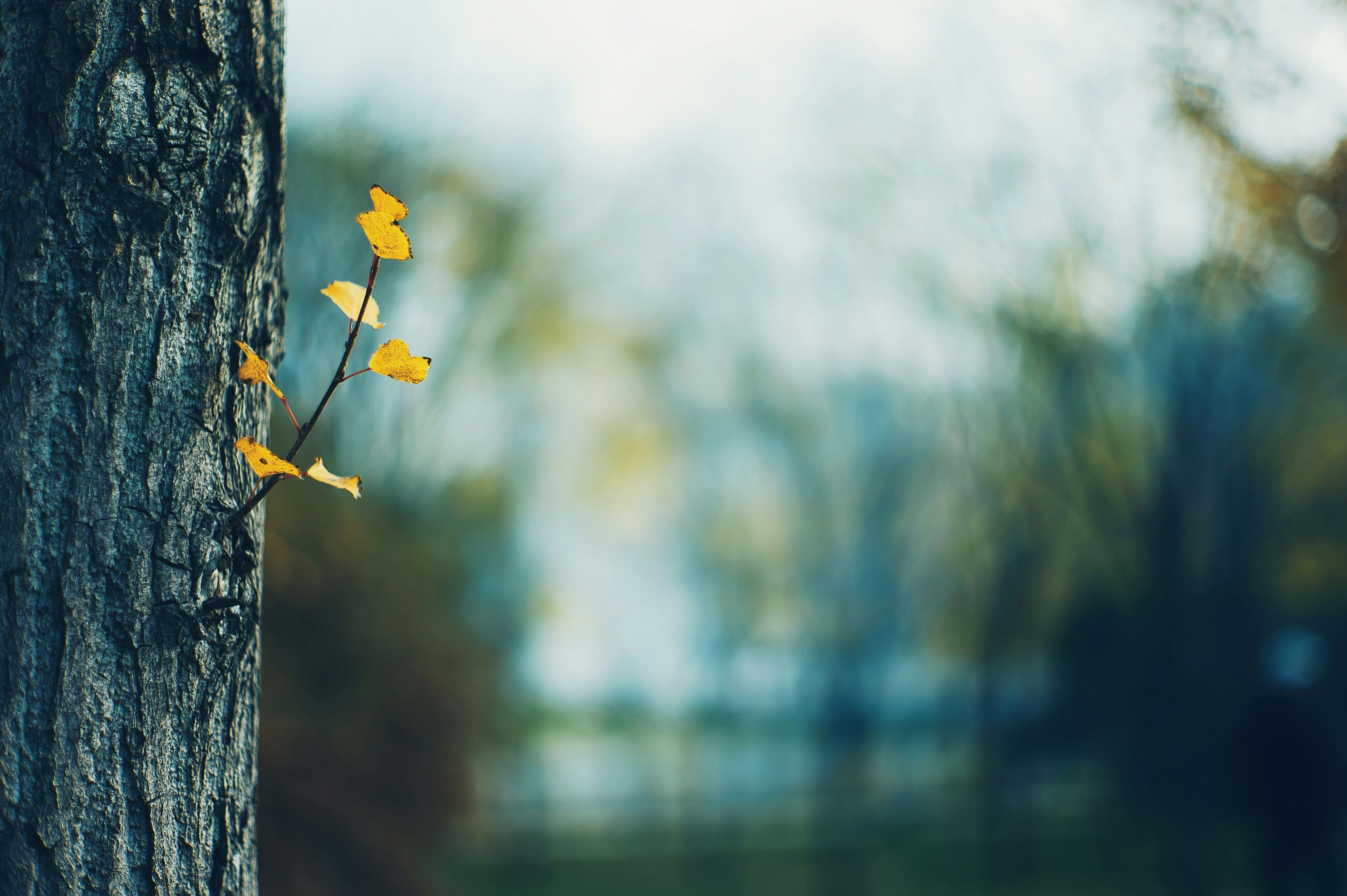 growth, flower, focus on foreground, freshness, close-up, nature, selective focus, plant, fragility, stem, beauty in nature, day, tree, no people, outdoors, yellow, growing, botany, bud, leaf