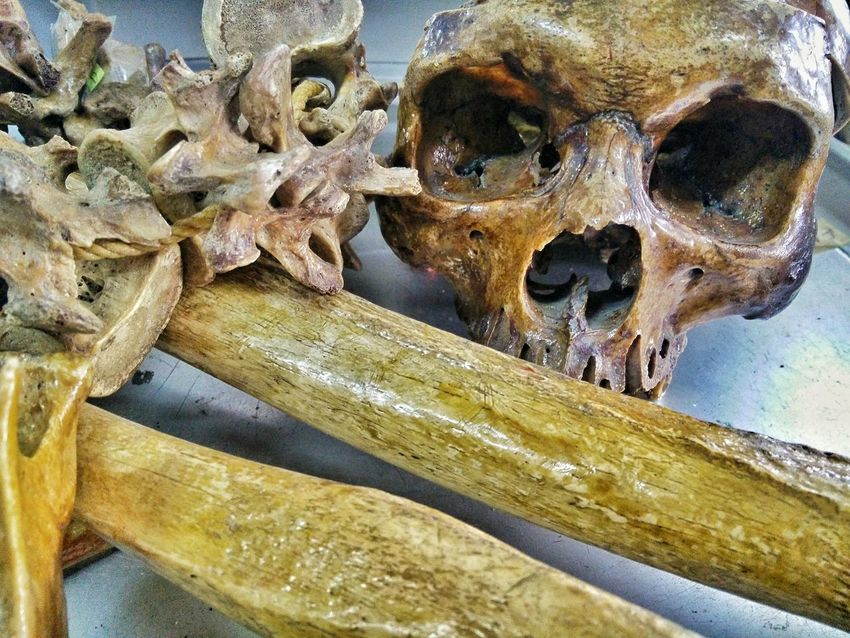 By the time we're done, we all end up bones anyway. Bones Skull Spine Femur Dailyphoto Aged Bone  Oneplusone Oneplusphotography