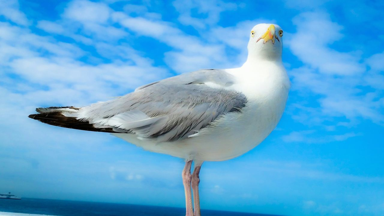Seagull Port Dover Seagulls Beautiful Nature Beautiful Birds Dreaming Or Dreaming?