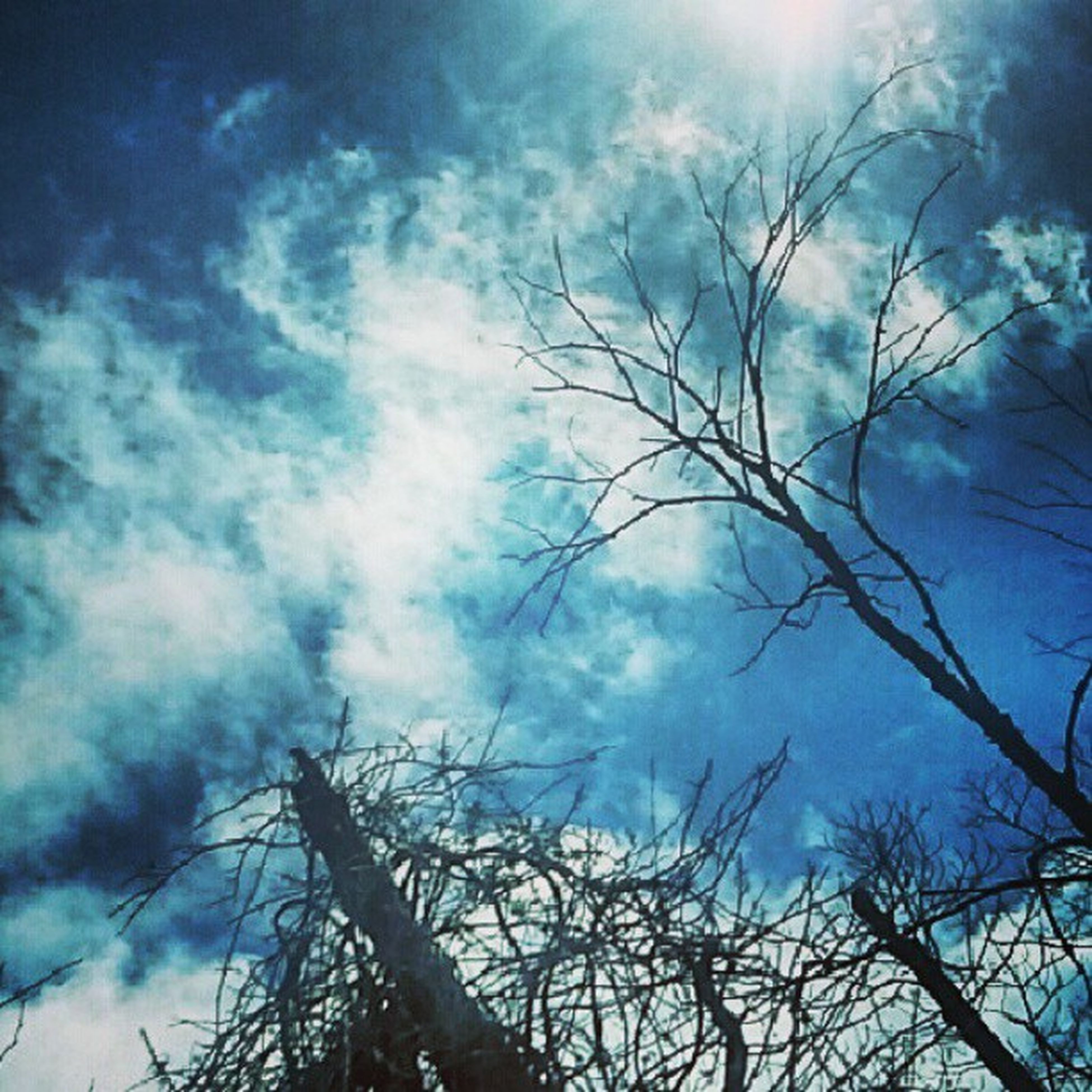 bare tree, low angle view, sky, branch, tree, silhouette, cloud - sky, tranquility, nature, beauty in nature, cloudy, scenics, cloud, tranquil scene, blue, outdoors, no people, dusk, day, tree trunk