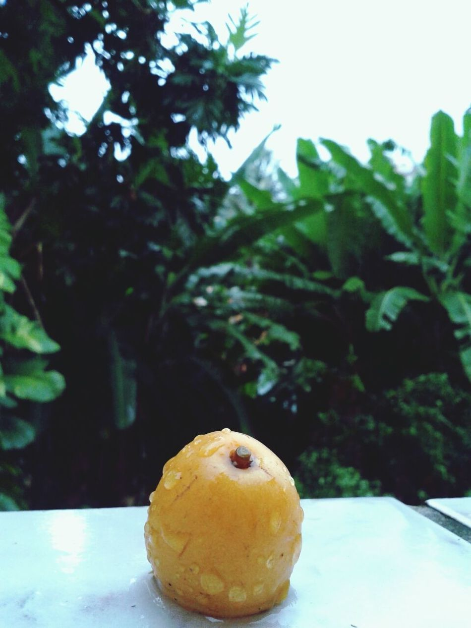 Tropical Fruits Delicious Sweet Followme :)