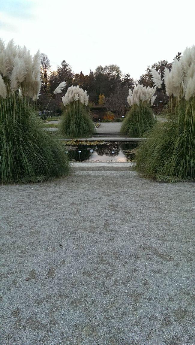 Grass Bassin White&green Square Stiff