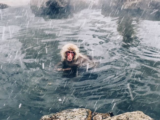 Snow Monkey Cold Bathing Ape