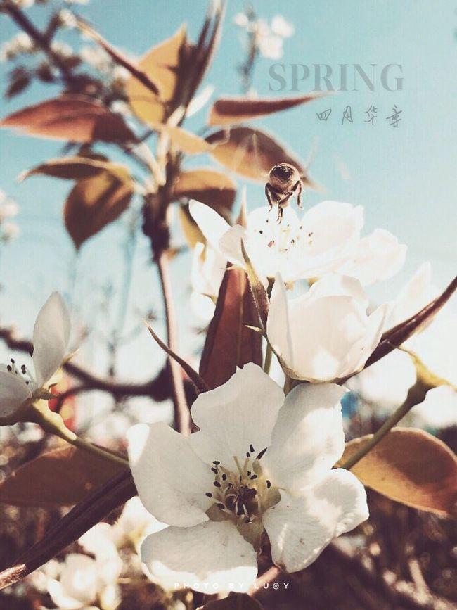 Enjoying The Sun Picking Flowers  Enjoying The View Relaxing Hello World Enjoying Life 城市 穿行 Fresh Air Spring Dream Taking Photos By IPhone