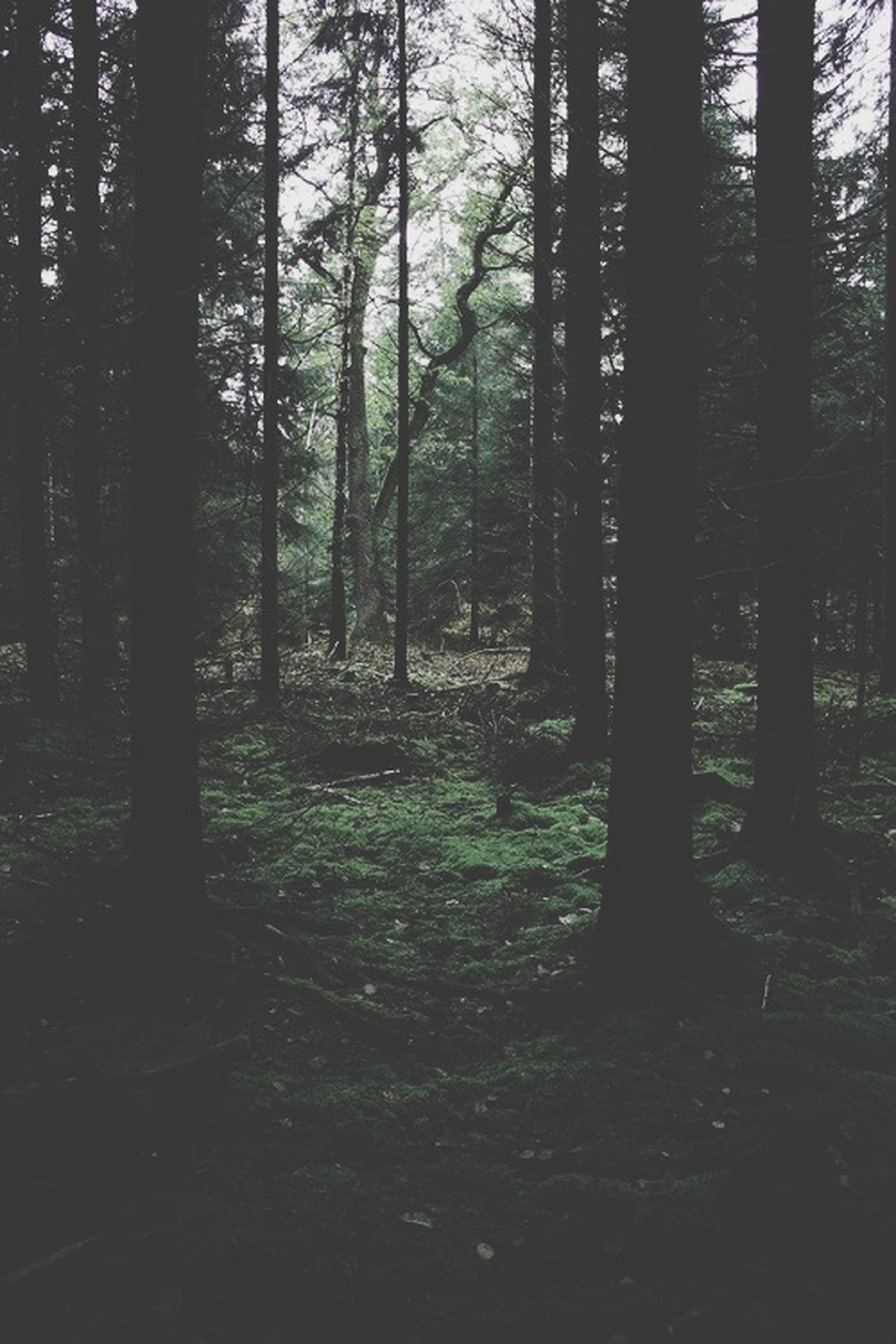 tree, forest, tree trunk, woodland, tranquility, tranquil scene, growth, nature, beauty in nature, scenics, non-urban scene, landscape, branch, outdoors, day, no people, sunlight, non urban scene, woods, idyllic
