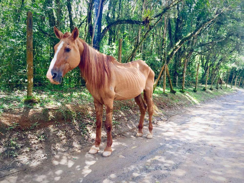 Taking Photos Pets Enjoying Life Horse Hello World