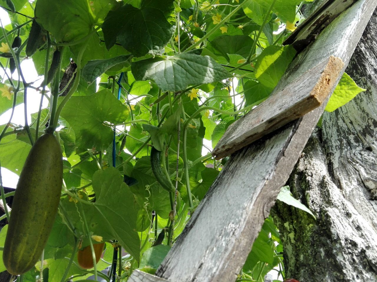 leaf, growth, green color, tree, no people, outdoors, nature, day, wood - material, plant, tree trunk, banana tree, branch, low angle view, close-up, beauty in nature, freshness