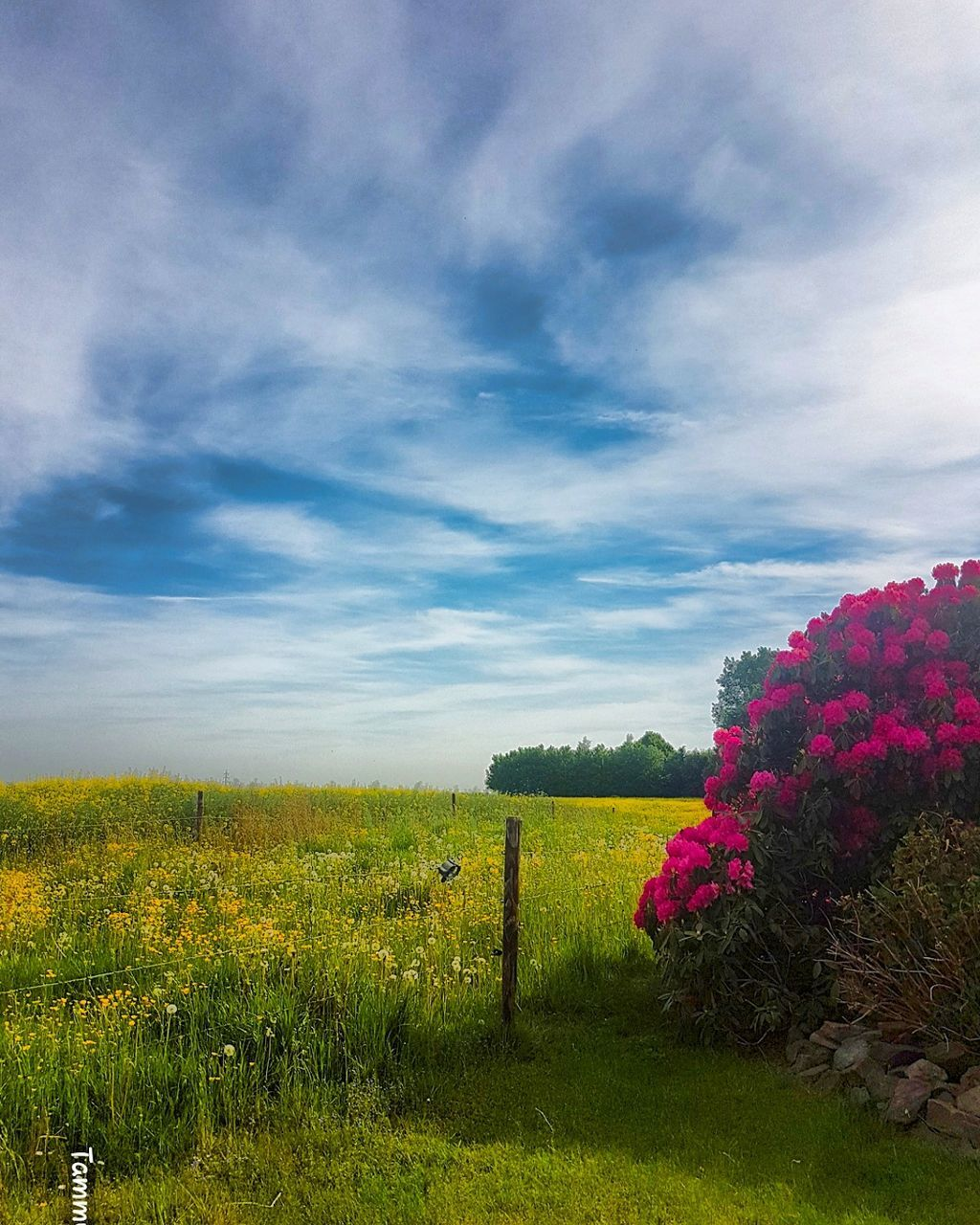nature, beauty in nature, growth, sky, flower, tranquility, cloud - sky, no people, field, tranquil scene, scenics, plant, day, outdoors, landscape, grass, tree, fragility, freshness