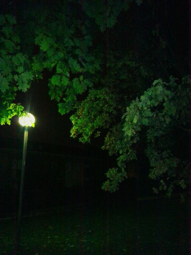 Taking Photos Nature Artphotography Shining Artistic Photo Nightphotography Night🌛