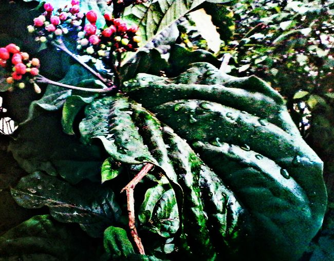 HDR Effect Taking Photos Check This Out The Week Of Eyeem Hdr_Collection Image Overlaying Lighting Effect Picart Editing Picartsstudio Getty Images Mobile Photoshop Mobile Artist Mobile Art Mobile_photographer Maskingbeauty Flower#garden#nature#ecuador#santodomingoecuador#eyeEmfollowers#iphoneonly#nofiltrer#macro_gardenprettybeautifulfollowmesho [ [ Macro Beauty Nature Photography My Best Shot EyeEm Nature Lovers Autumn Leafs Autumn Colors Autumn🍁🍁🍁 Autumn Collection Autum2016
