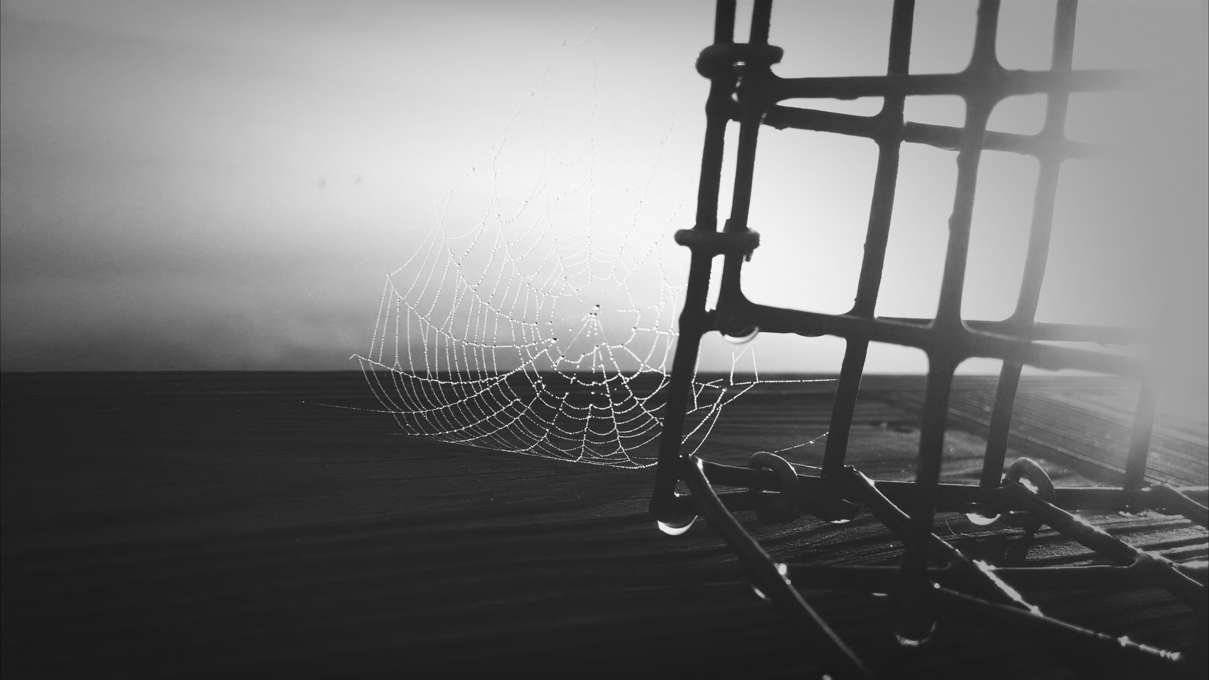 water, drop, window, indoors, wet, glass - material, transparent, clear sky, rain, nature, sky, weather, day, no people, sunlight, close-up, tranquility, spider web, beauty in nature, raindrop
