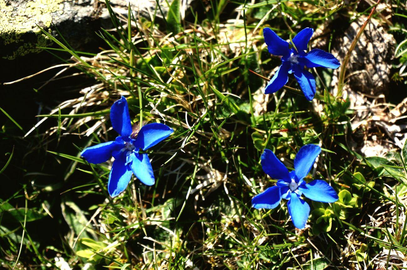 Blue Flowers Mountain