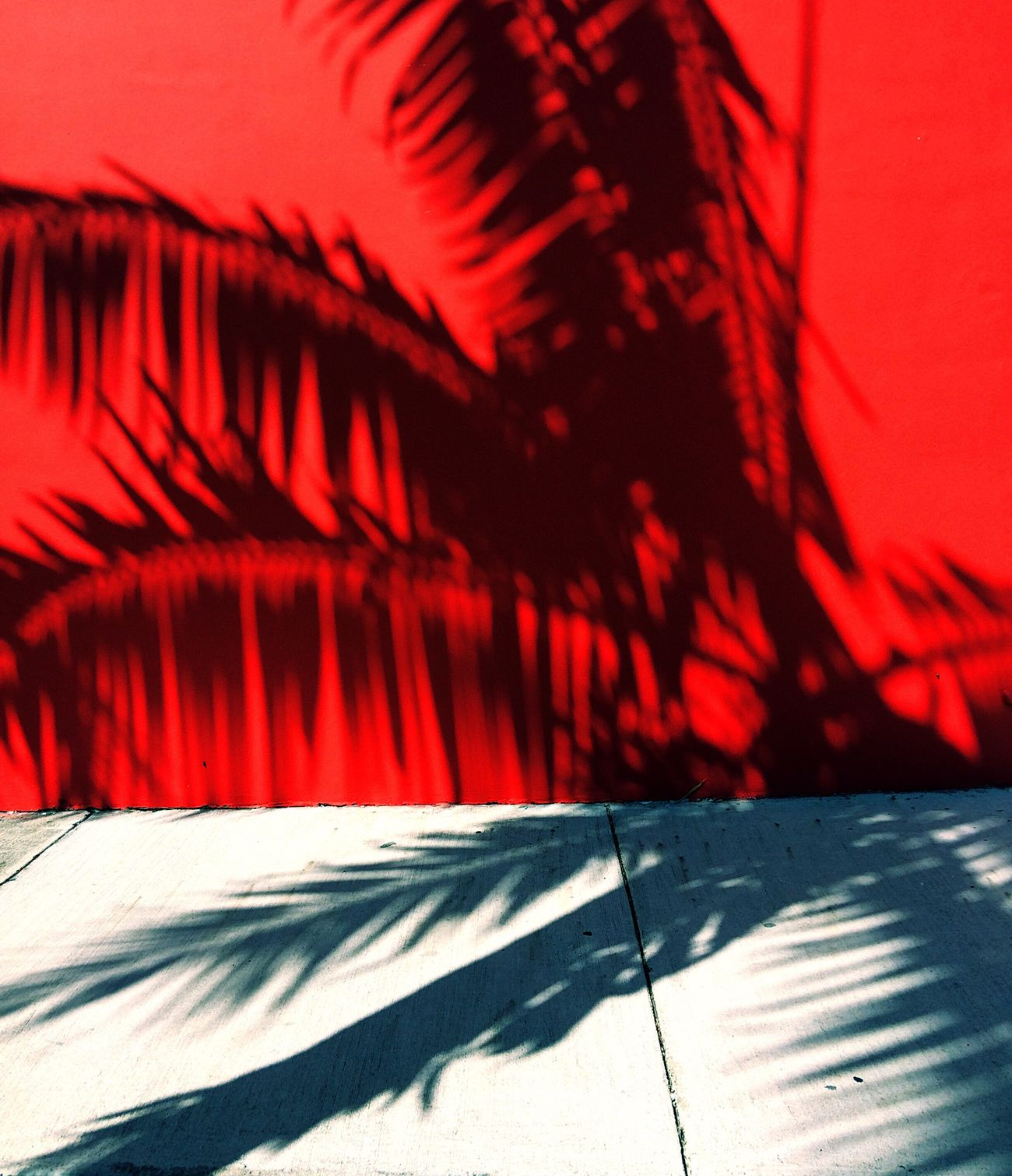 Red Backgrounds Shadow No People Minimalist Architecture The City Light Unique Perspectives Silhouette Outdoors Urban Landscape Urban Jungle palm tree shadow Palm Tree Palm Leaf Shadows The City Light Minimalist Architecture