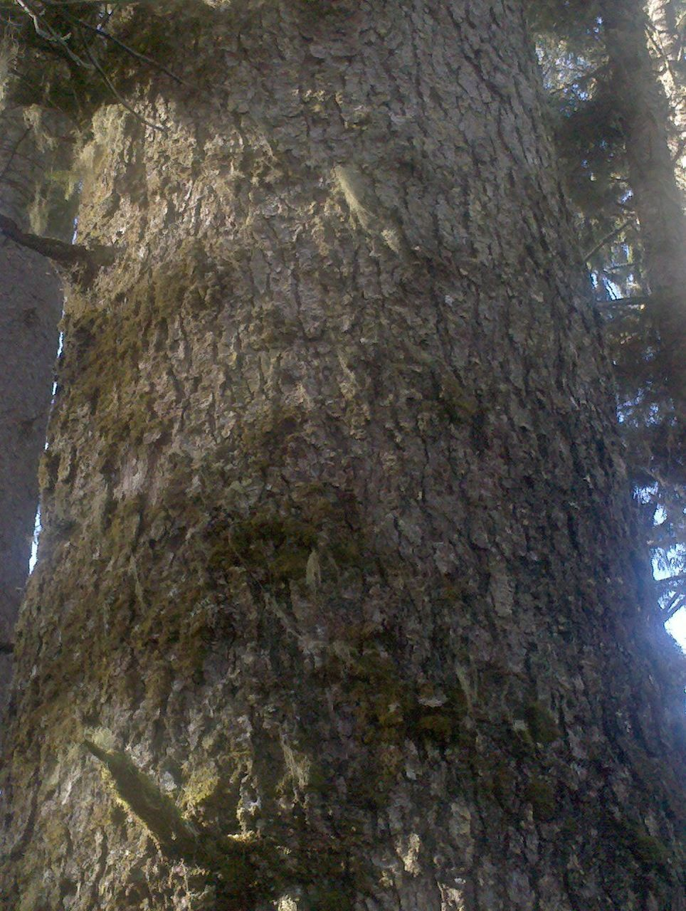 tree trunk, tree, nature, no people, bark, growth, day, outdoors, close-up