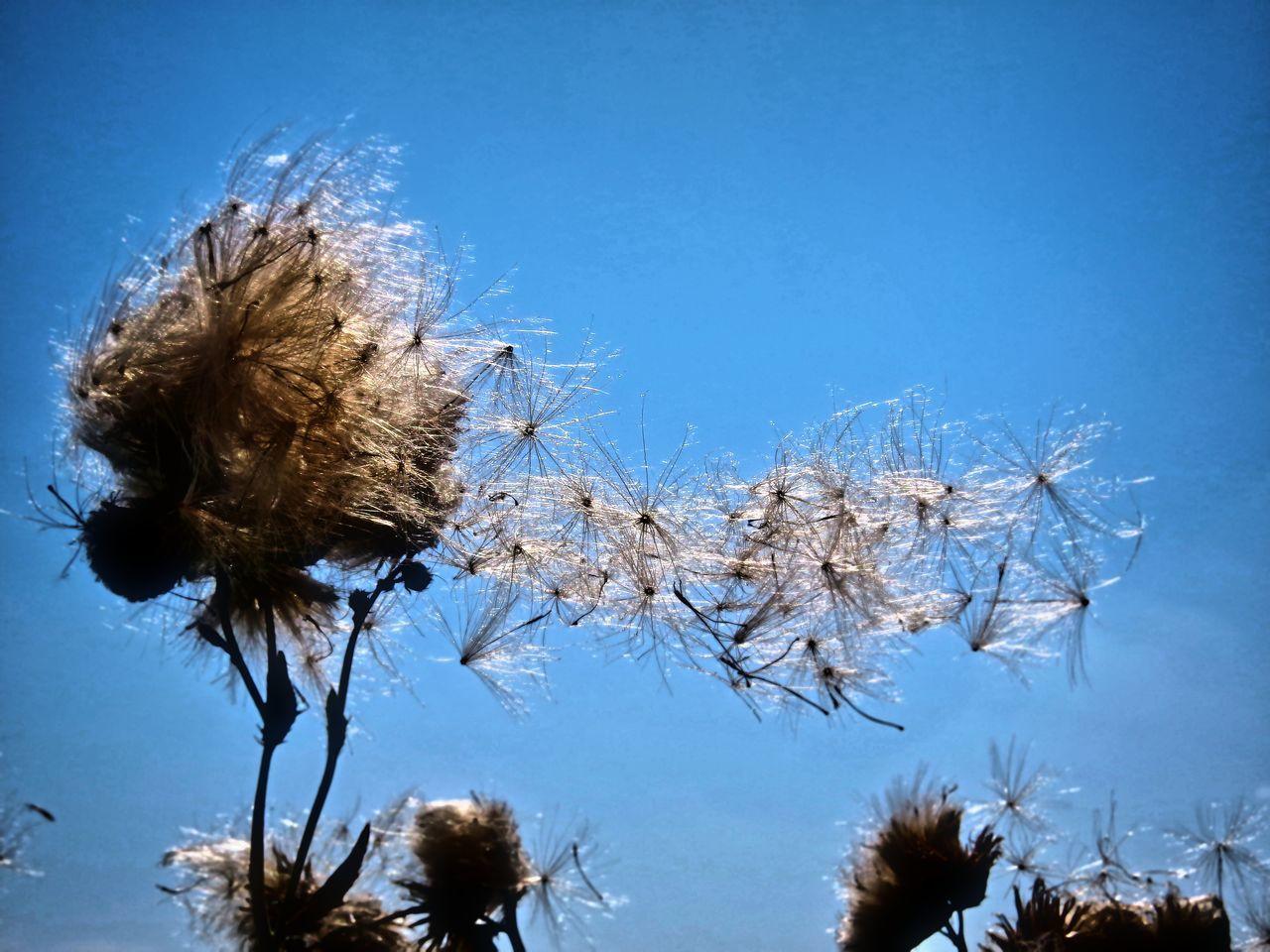 Beauty In Nature Blue Nature Nature Planzen Samen Wind