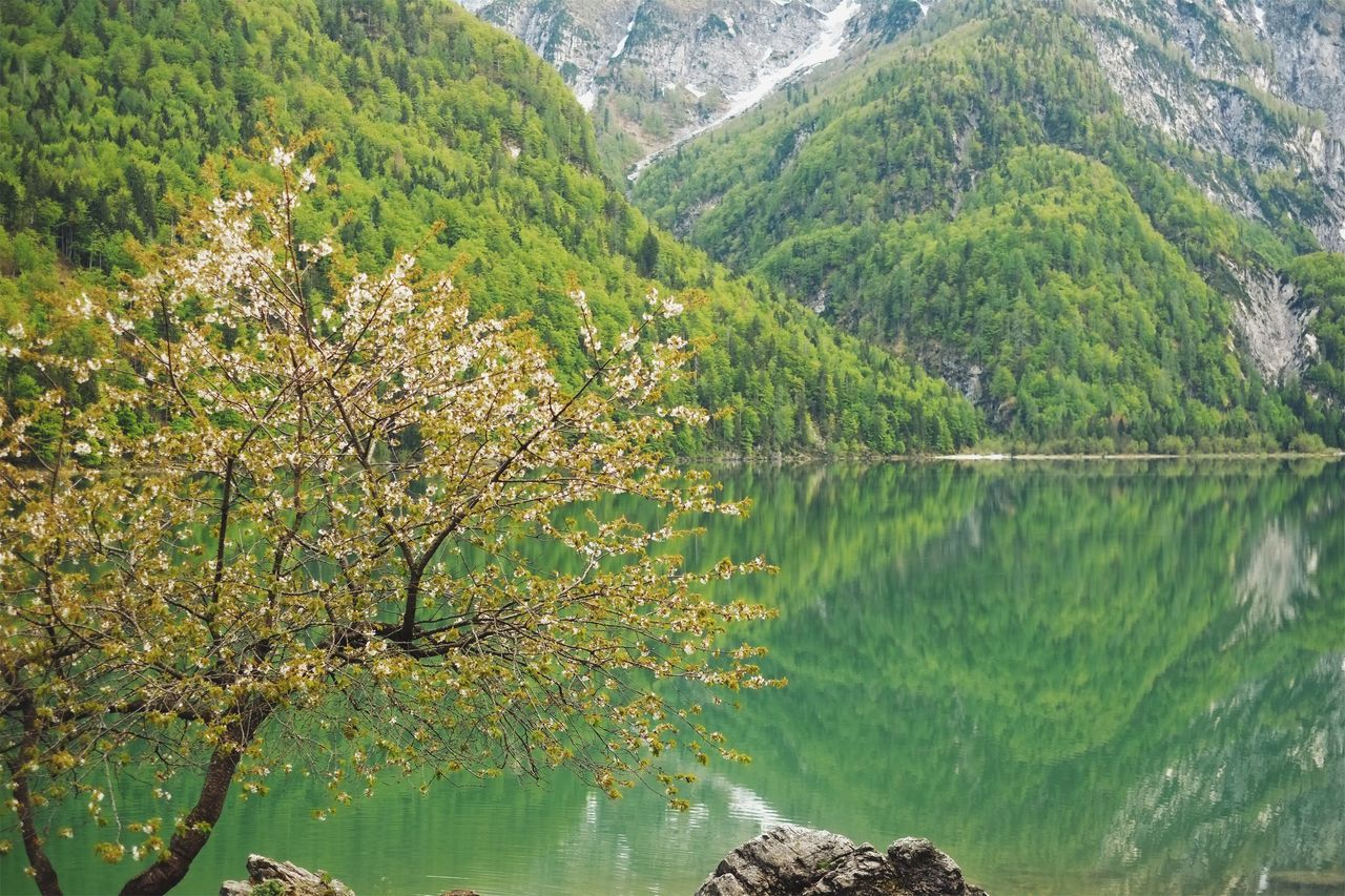 Amazing lake. Beauty In Nature Tree Nature Mountain Scenics Tranquility Water Growth No People Green Color Day Outdoors Lake Plant Forest Branch Sky