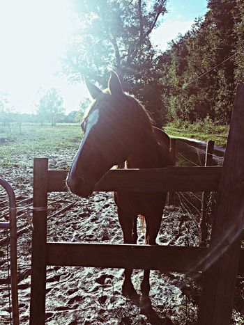 Love this horse.?? Horse IPhoneography Farm Love