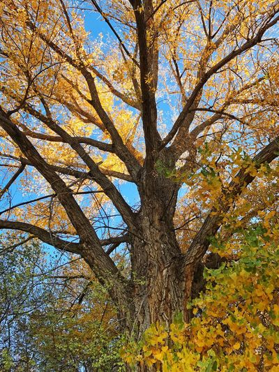Tree Low Angle View Nature Beauty In Nature Sky Outdoors No People Branch Autumn Day Tranquility Scenics Close-up My Year My View