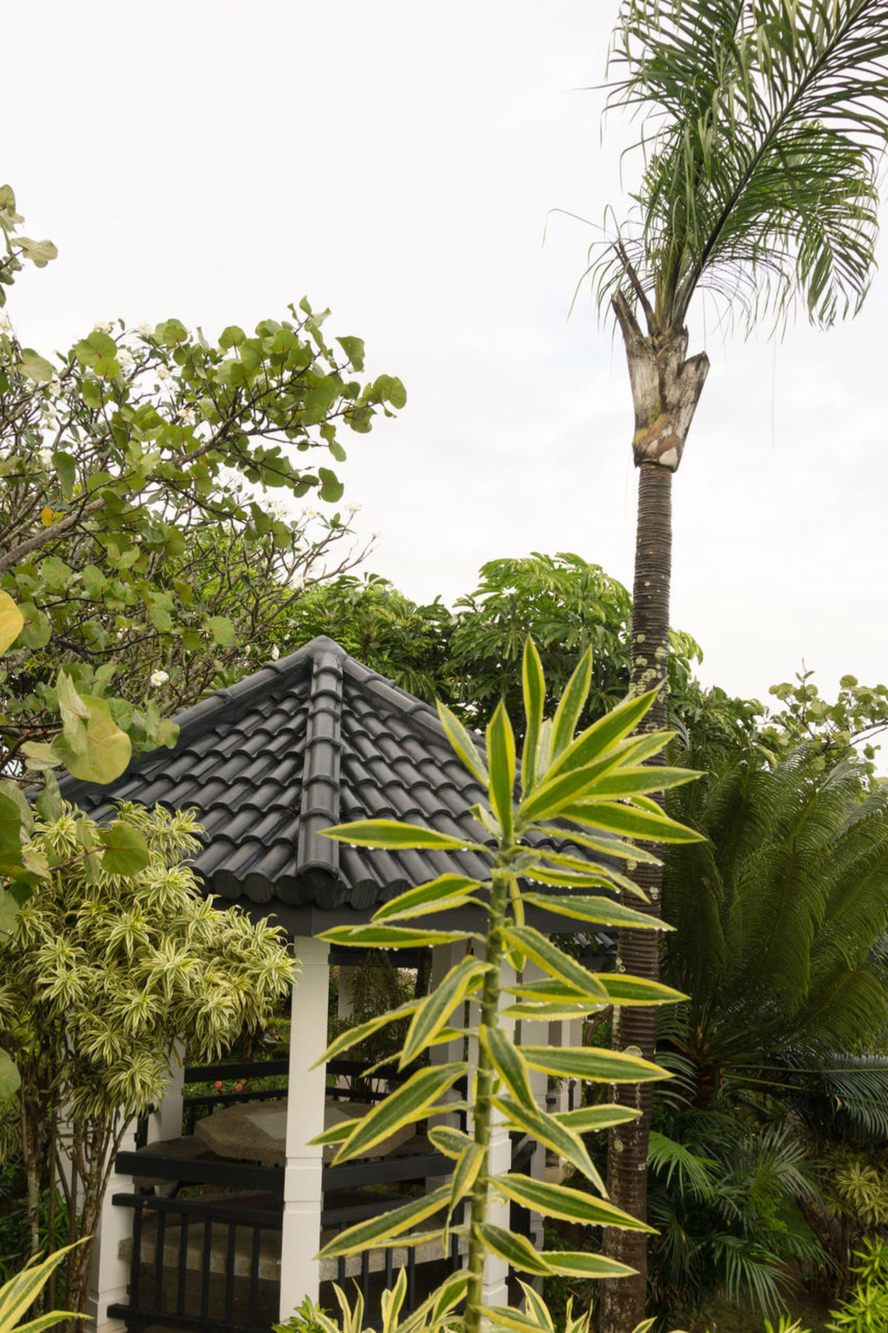 Swimming pool area in the Philippines, foliage. Buildings Foliage, Vegetation, Plants, Green, Leaves, Leafage, Undergrowth, Underbrush, Plant Life, Flora Outdoors Outside Palm Tree Palm Trees ❤❤ Philippines Photos Pool Roof Tops Swimming Pool
