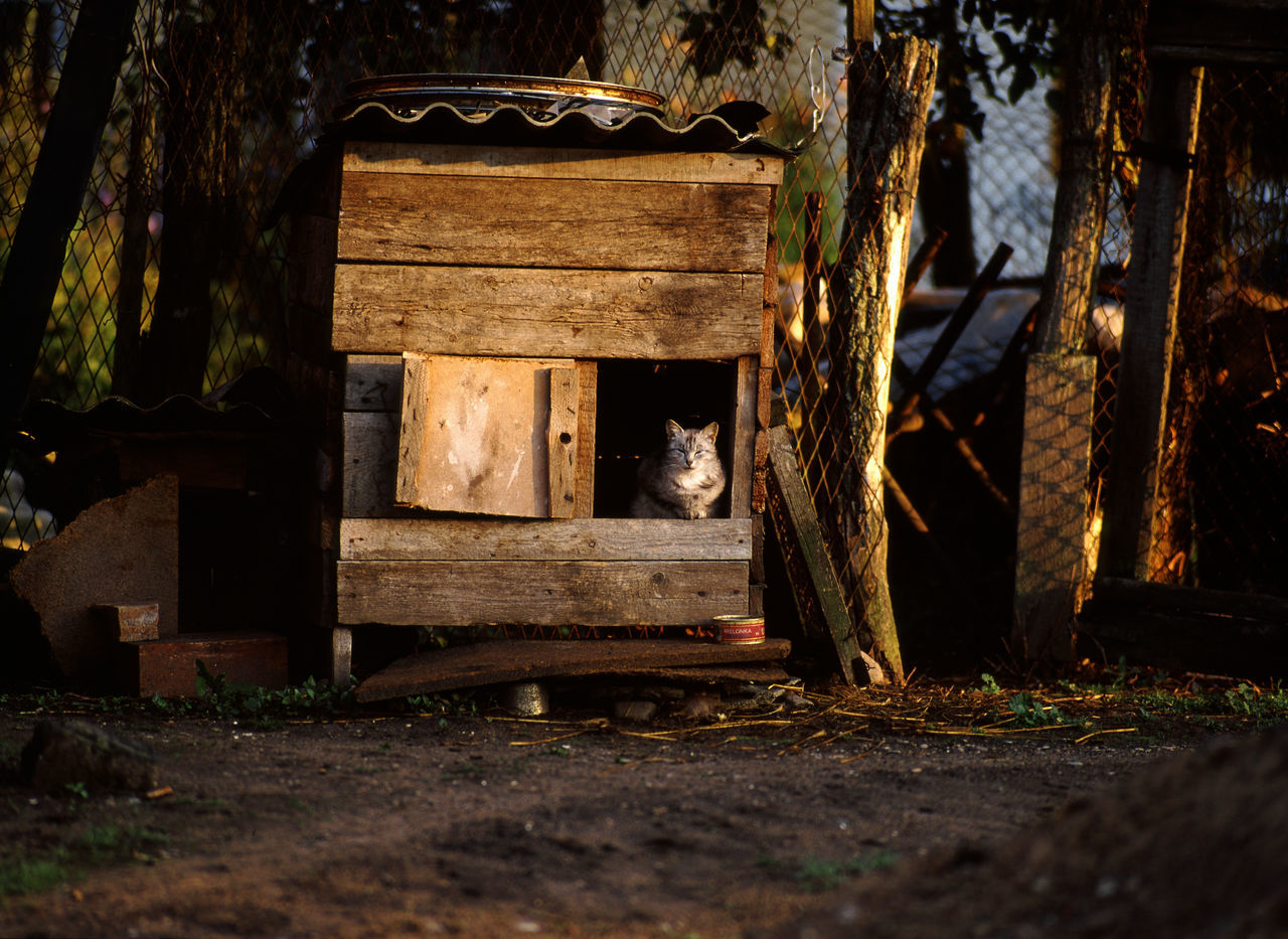 Animal Animals Cat Cat In The Dog Kennel Cat In The Kennel Cat Like A Dog Cats Dog Kennel Funny Joke Kennel Kennel Dog Wood - Material