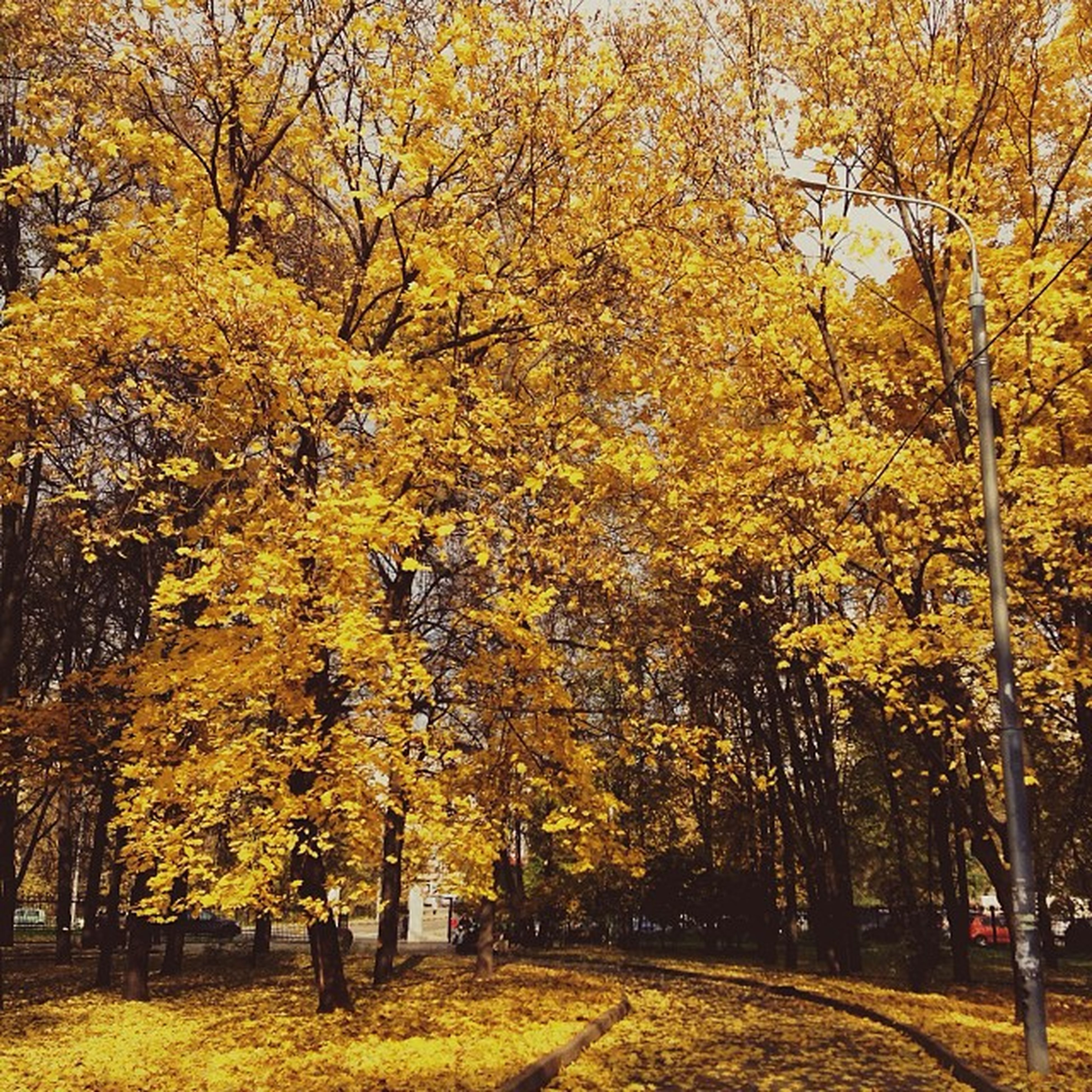 tree, autumn, change, yellow, season, branch, tranquility, growth, nature, beauty in nature, tranquil scene, scenics, orange color, park - man made space, tree trunk, the way forward, leaf, outdoors, treelined, day