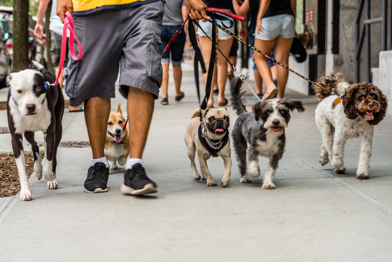 Beautiful stock photos of herz, Animal Themes, City, Day, Dog