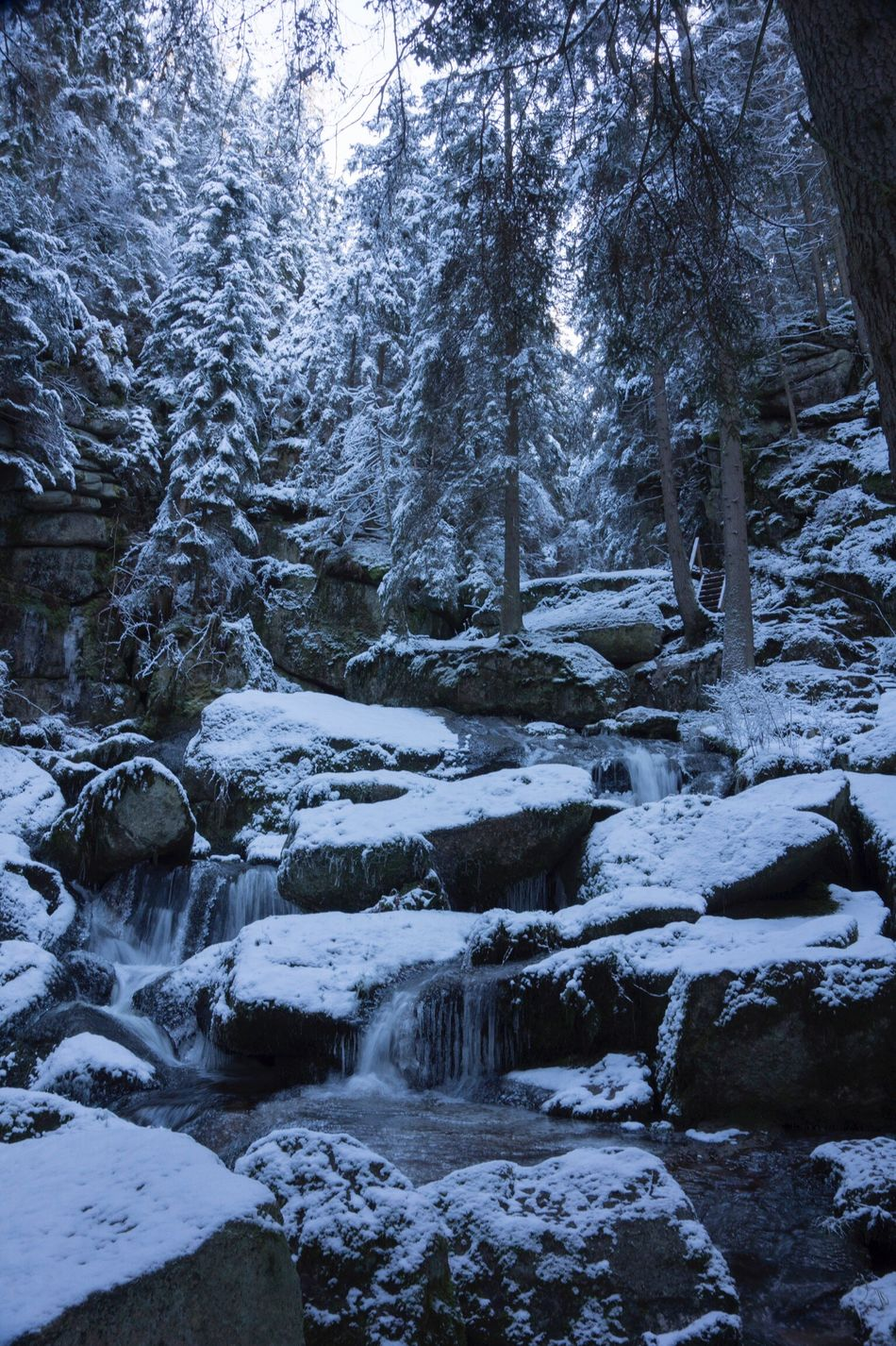 Tree Cold Temperature Winter Nature Forest Beauty In Nature Scenics Non-urban Scene Snow Tranquility Weather Tranquil Scene Frozen Outdoors Landscape Day No People Silence Falls Winterfall Water River River View Austria