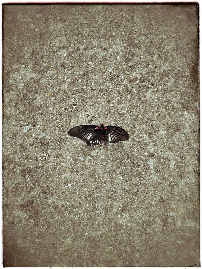 IPhoneography Butterfly Insect