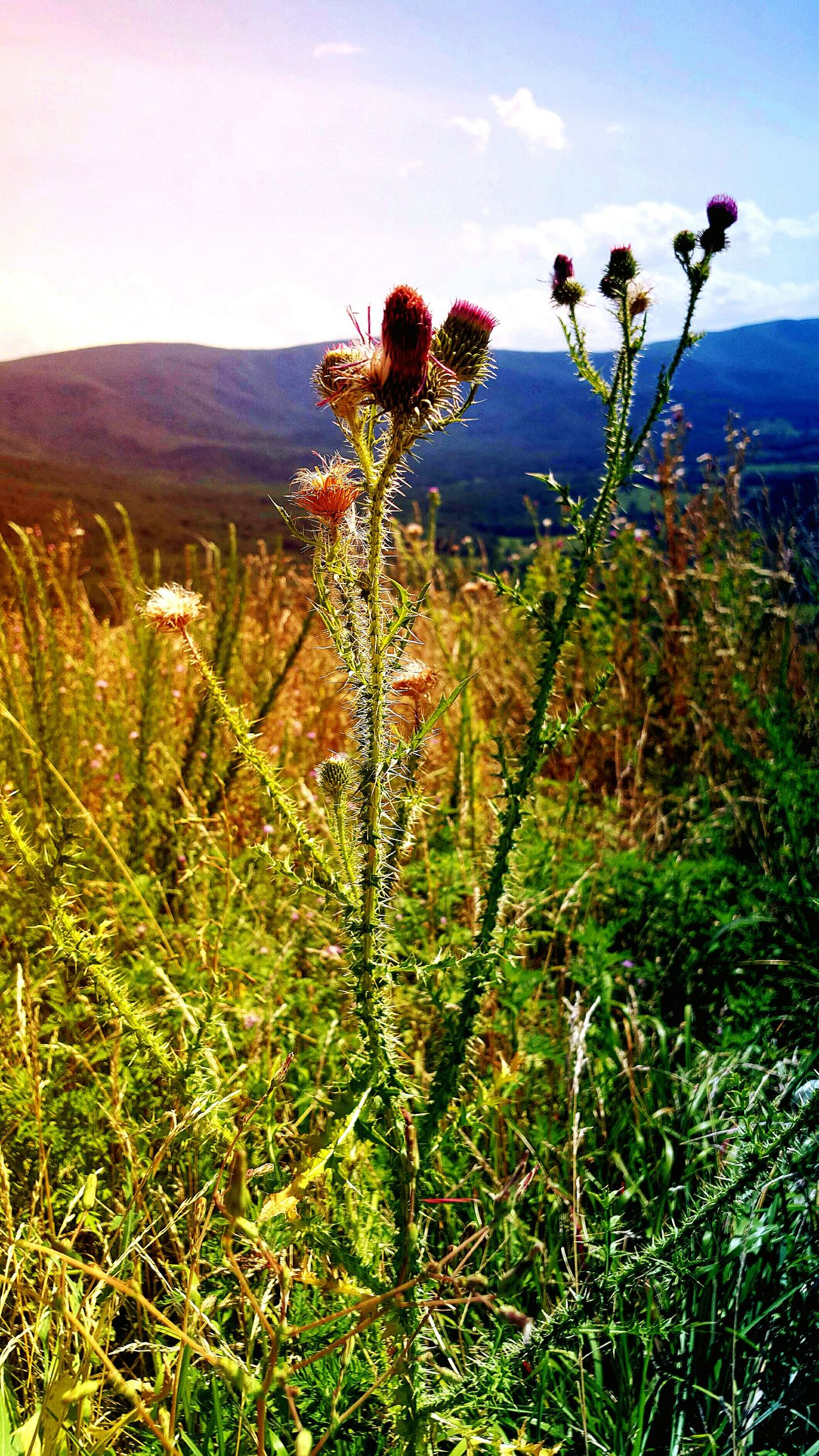 Wildflowers Wild Grasses Autumn Colors Favorite Places Pure Mind With Pure Air