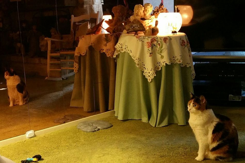 Light And Reflection Full Length Indoors  Reflection Popularphotos EyeEm Gallery Nofilter Shadows Cats Animals Calicocats Low Lights Neighbors Pet Mirrors