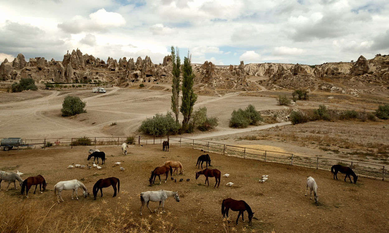 Horse Corrals Cappadocia Grazing Horse Horses Turkey Agriculture Animal Themes Beauty In Nature Cloud - Sky Domestic Animals Ducks Fence Posts Field Grass Göreme Landscape Large Group Of Animals Livestock Mammal Mountain Nature Nevsehir Scenics Sky Tree