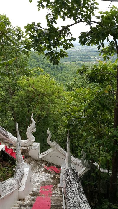 Tree Day Outdoors Growth No People Nature Sculpture Sky Construction Stairways Buddisttemple Buddism Stairway Stairway วัดพระธาตุดอยเล็ง Big Snake Building Exterior Architecture Temple Travel Destinations Mountain Range Moutain View