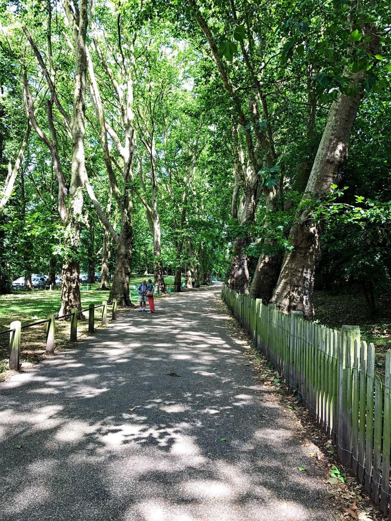 EyeEm LOST IN London Hampstead Heath Nw3 Sky Tree Nature Walking Tranquil Scene Outdoors Beauty In Nature Hampstead Village London Nofilter