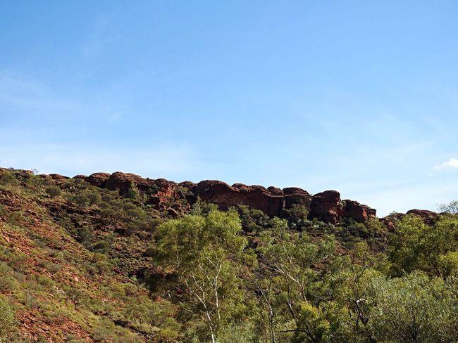 Landscape Australia Northern Territory Kingscreek Bush