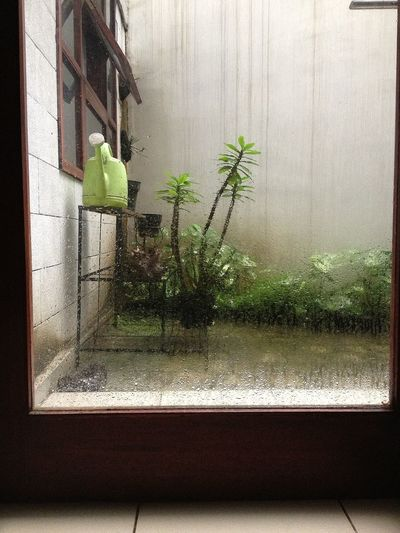 The Rain Got It