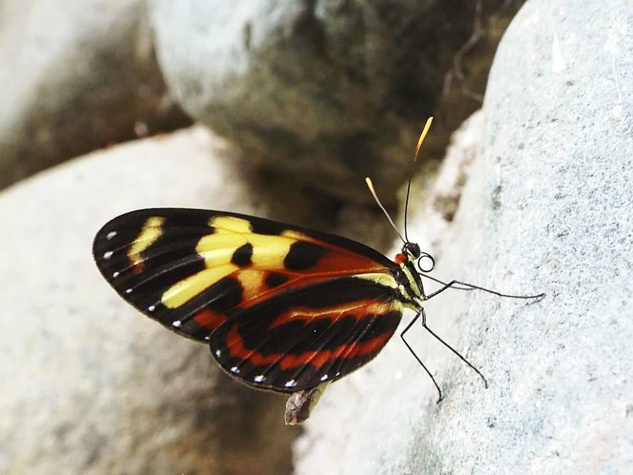 Insect Animals In The Wild Butterfly - Insect Animal Wildlife Day Nature One Animal Animal Themes Close-up Fragility Beauty In Nature Freshness Nature Photography Nature