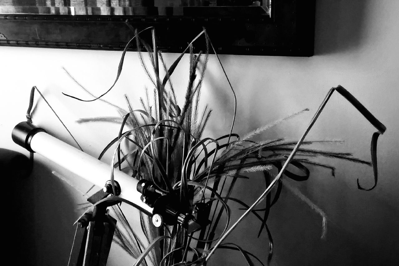 /launched that shot and he was caught out there/ [🎵😎 📻✊🎵🎵👉 https://youtu.be/Kyar2C_wEq8] Still Life Interiors Arrangement Houseplants Monochrome Black & White