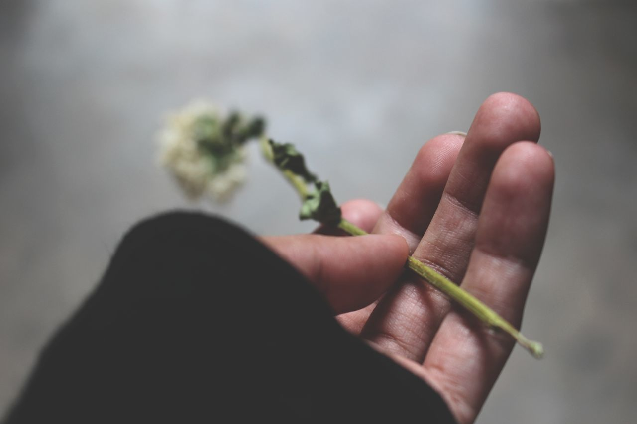 Cropped Hand Of Person Holding Dry Flower